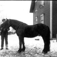 Ein hest og ein ung gut som holder tømmene.